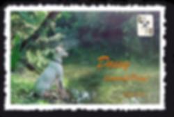 Daisy_Postkarte.png