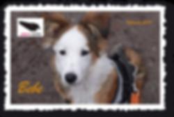 Bebe_Postkarte.png