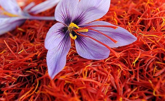 Safforn-Farming.jpeg