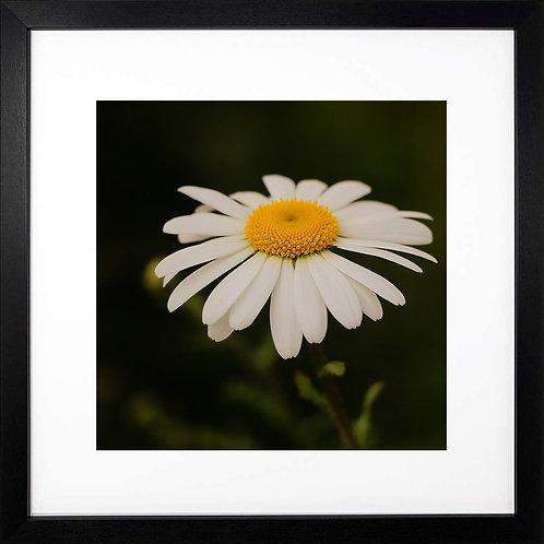 Square Wild Daisy print