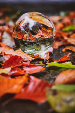 Autumn Lensball
