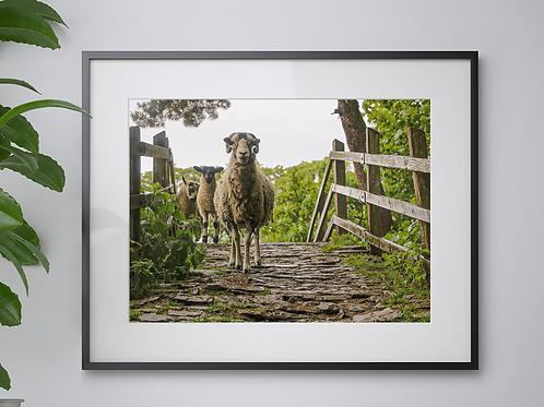 Yorkshire Bridge print