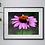 Thumbnail: A3 Bumblebee print