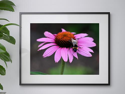 A3 Bumblebee print
