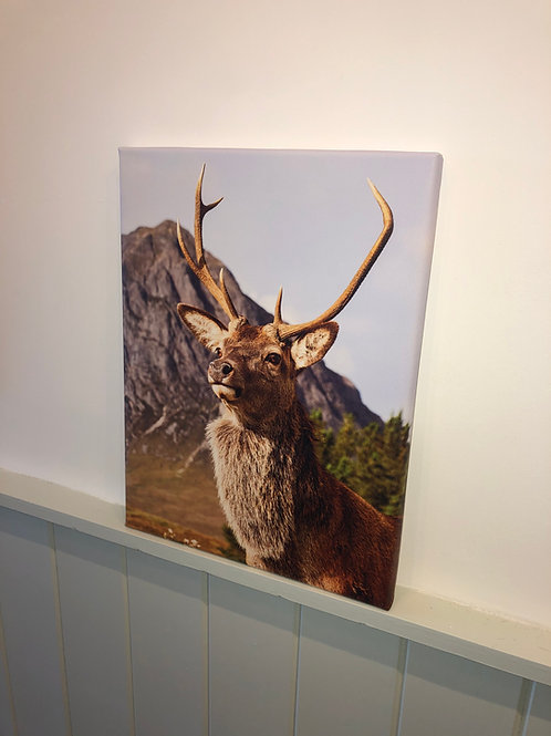 Canvas stag print (A3)