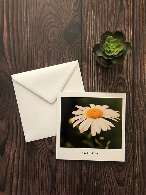 Wild Daisy greeting card