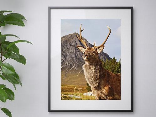 A3 Highland Stag print