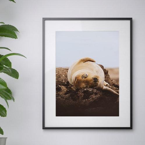 Lazy Seal print