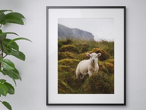 A3 Pen-Y-Ghent Lamb print