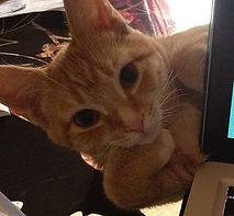 Orange tabby cat, smart cat