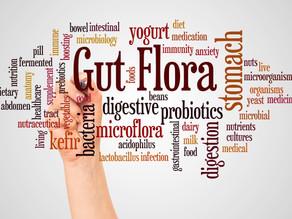 Feeding Our Gut Flora For Good Health