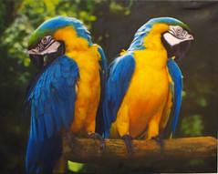NB4005 Twin Golden Macaws