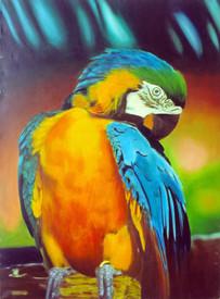 Golden Chest Macaw