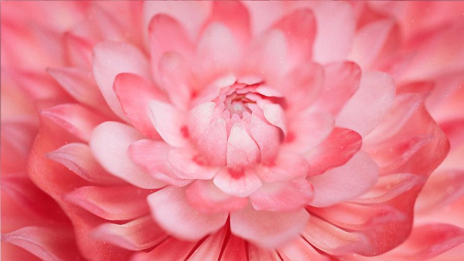 Romance_Flower_02_02_cc.jpg
