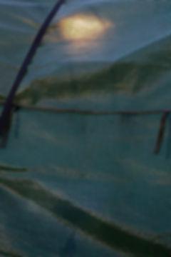 TentLW.jpg
