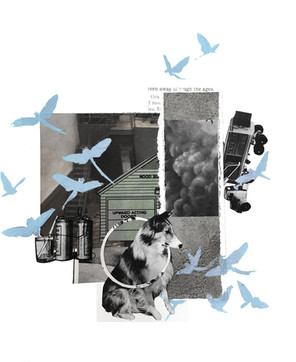 collage with dog