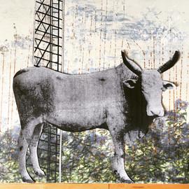detail - bull in field