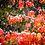 Thumbnail: Snow in Autumn - Sammamish, Washington