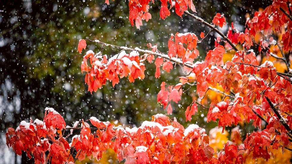 Snow in Autumn - Sammamish, Washington