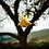Thumbnail: Falling Leaf - Shenandoah National Park