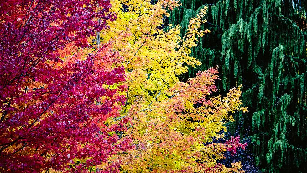 Autumn in Seattle - Seattle, Washington
