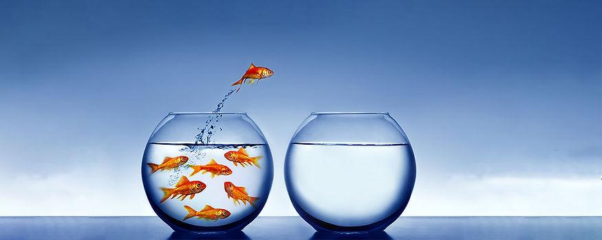 Fish 4.jpg