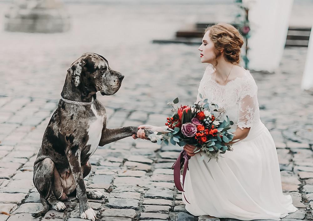 Dog Friendly wedding ceremony | manchester wedding photographer