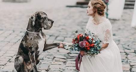 How To Include Your Dog At  Your Wedding | Manchester Wedding Photographer | Urban Photo Lab