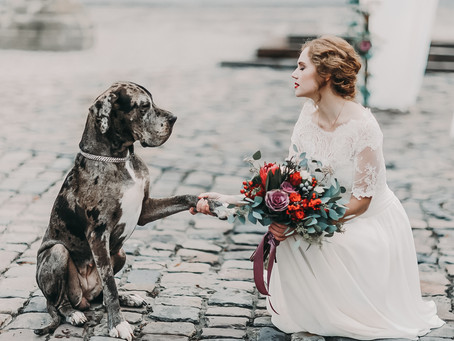 How To Include Your Dog At  Your Wedding | Manchester Wedding Photographer
