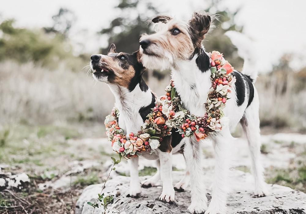 dog at your wedding | cheshire wedding photography