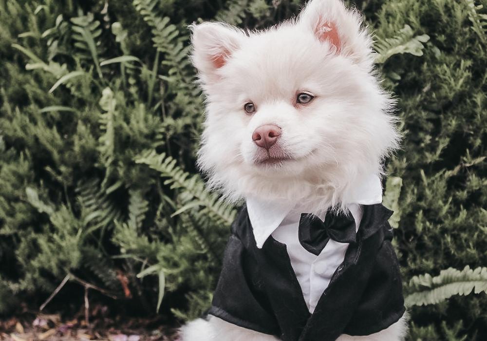dog at your wedding tips | manchester wedding photographer