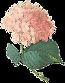 Flores de color rosa Ilustración