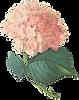 Rosa fiori di Illustrazione