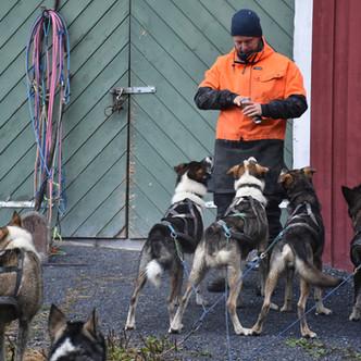 Immersion norvégienne avec des chiens de traîneaux [Partie 1/2]