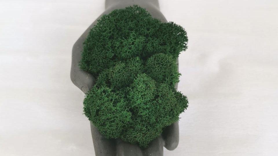 Бетонная рука дополнена стабилизированным мхом