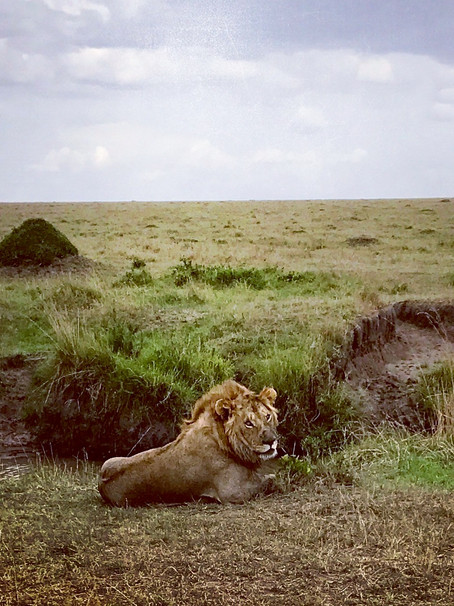 Welcome to the Masai Mara safari