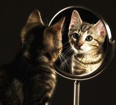 kat in spiegel 7.jpg