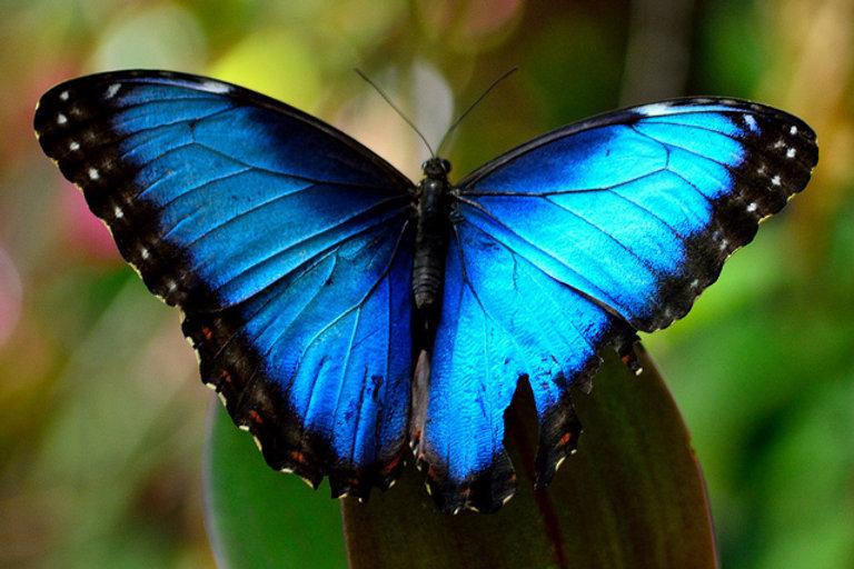 blue-butterfly mom.jpeg