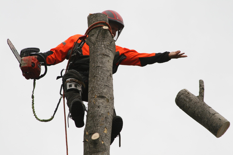 Trefelling utført ved klatring