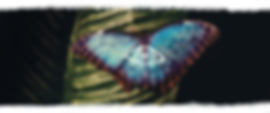 Butterfly-Banner-with-wash.png