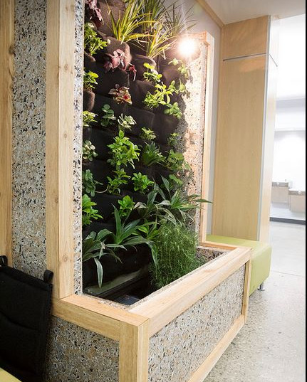 Living Wall using Exposed Interior