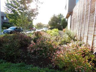 Evolución jardín después de 1 año de creación