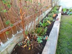 jardinería jardín rústico