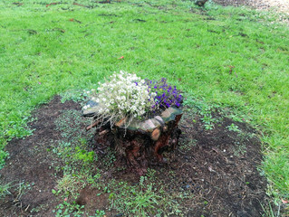 Volteo árbol jardín