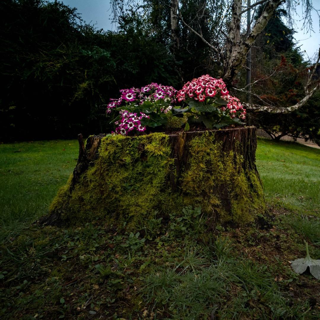 Amamos estos espacios... Volteamos año anterior, luego se ahuecó tronco sirviendo como macetero para