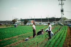 עובדי אלביט מתנדבים בגינה
