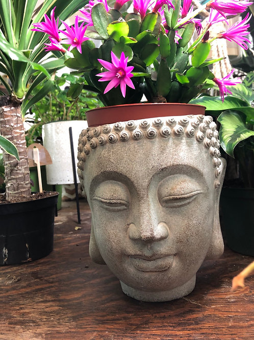 "Buddha Pot 6"""