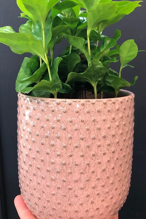 """Antique Pink 4"""" Tall Pot"""