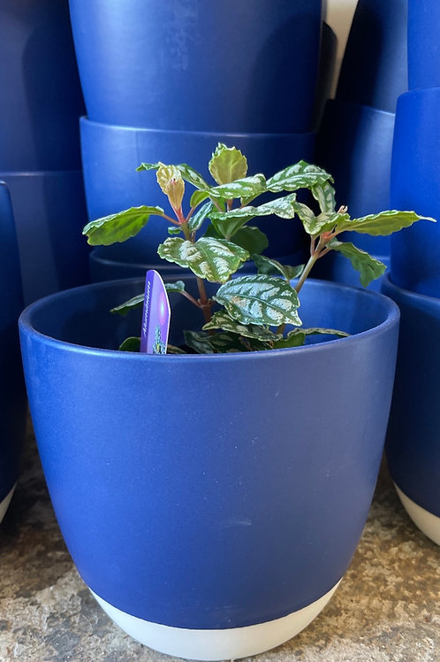 Summer Blue Pots 5""