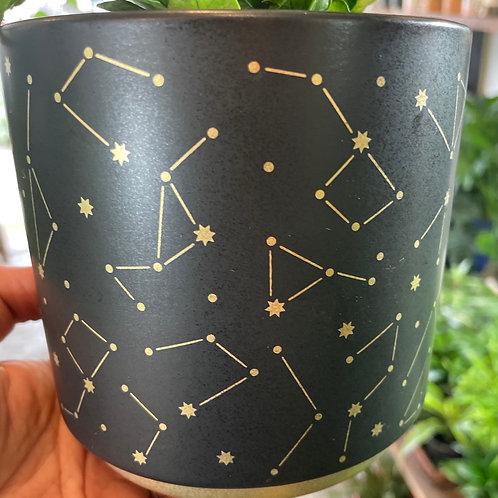 "Constellation Pot 4"""